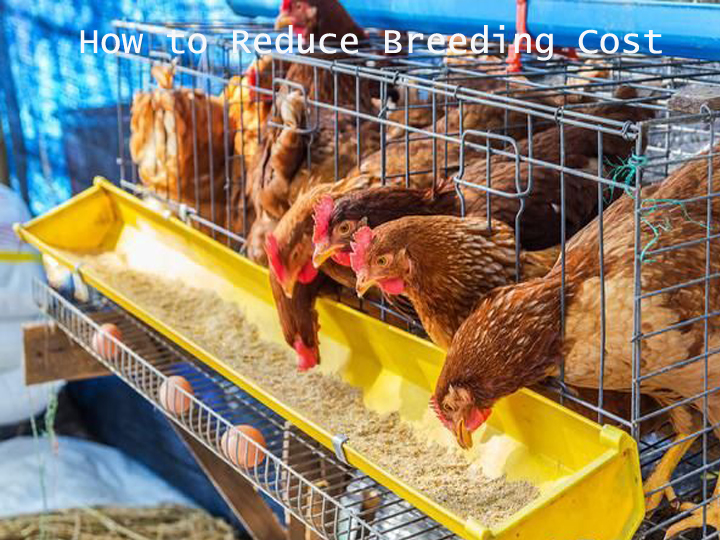 how to reduce breeding cost