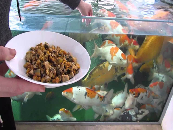 artificial fish feed